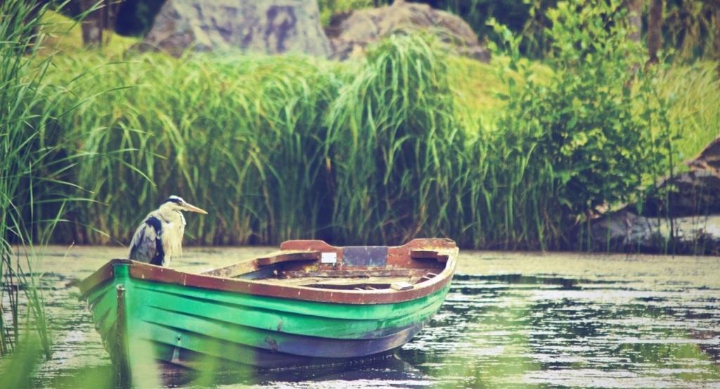 birdonboat1