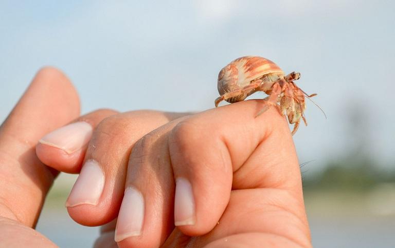hermit-crab-363593_1920