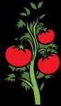 tomatoes-40280_1280
