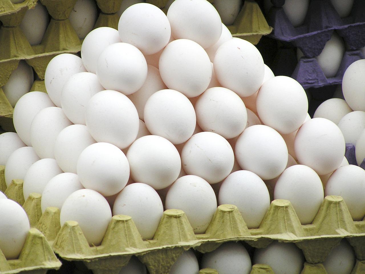 egg-818191_1280