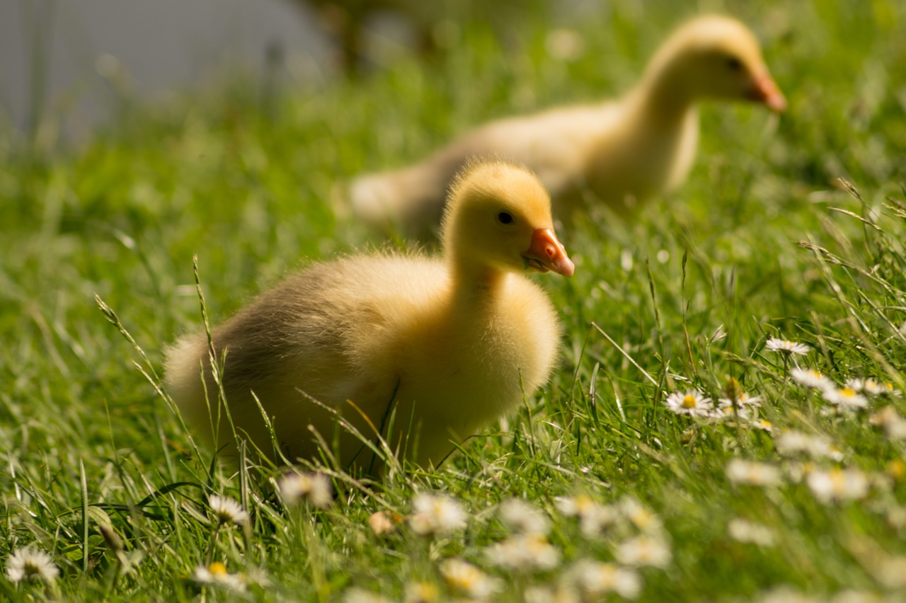 lawn-meadow-close-up-view-animals