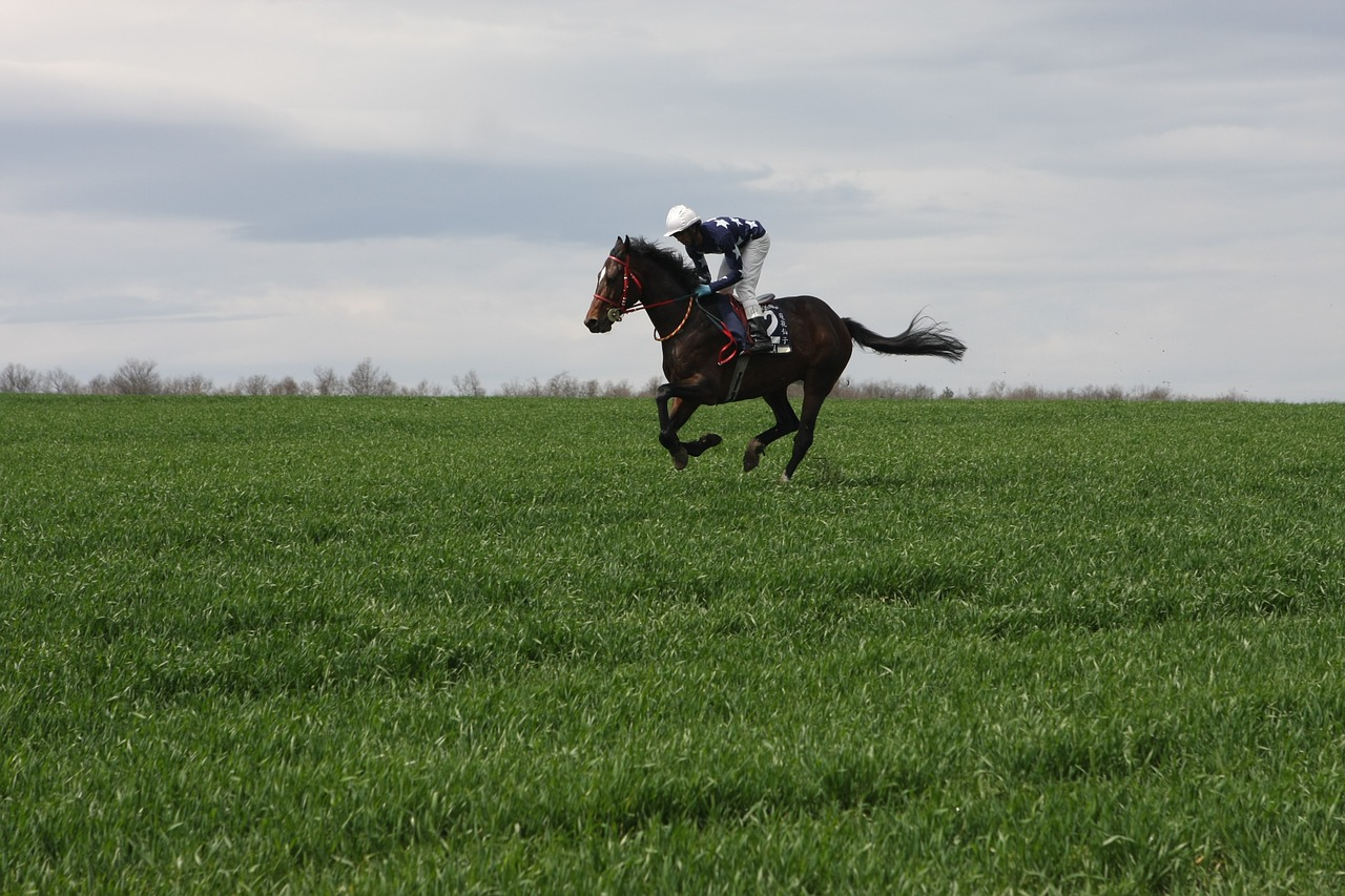 horse-729069_1280